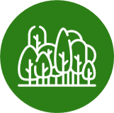 Forestry Carbon Programme